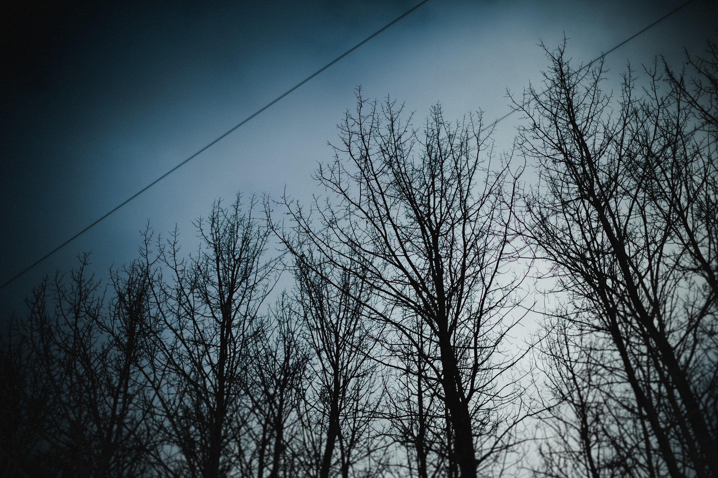 @ThisAlexTakesPics-Instagram-Trees and dark clouds-6.jpg