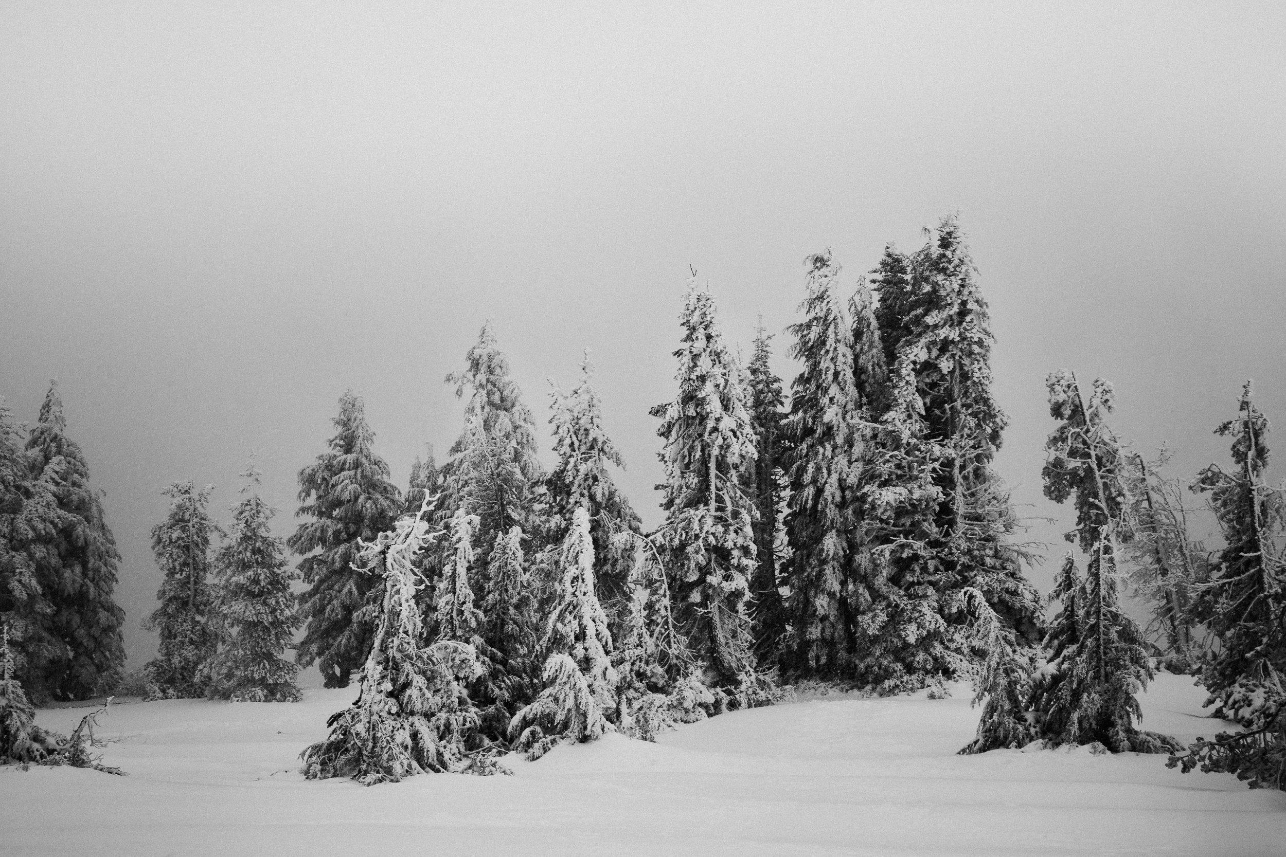 Winter_Wonderland-6.jpg