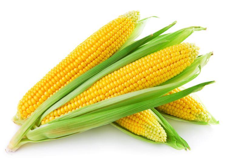 03-30-16 Corn.JPG