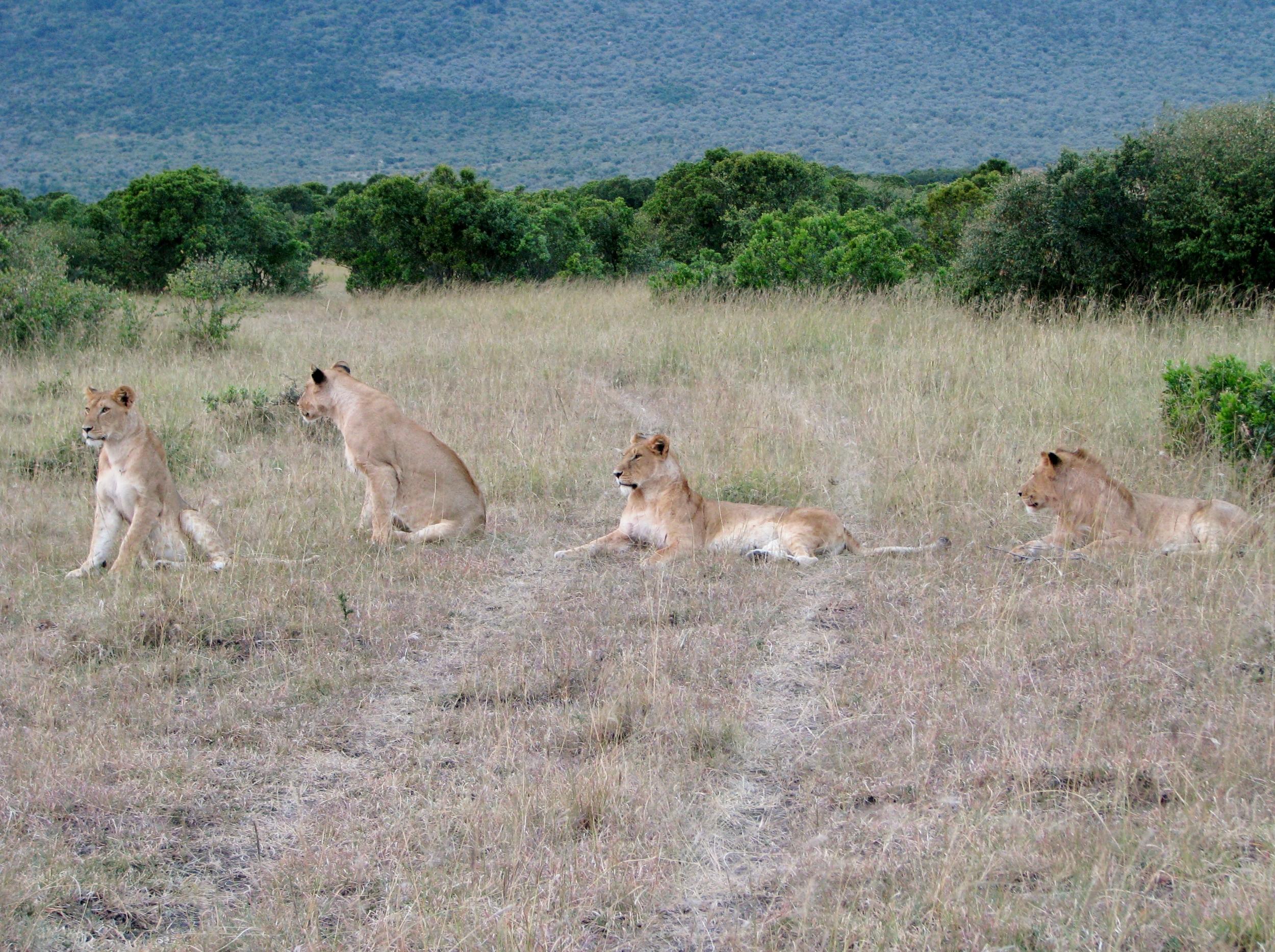 08-18-16 lions3.JPG