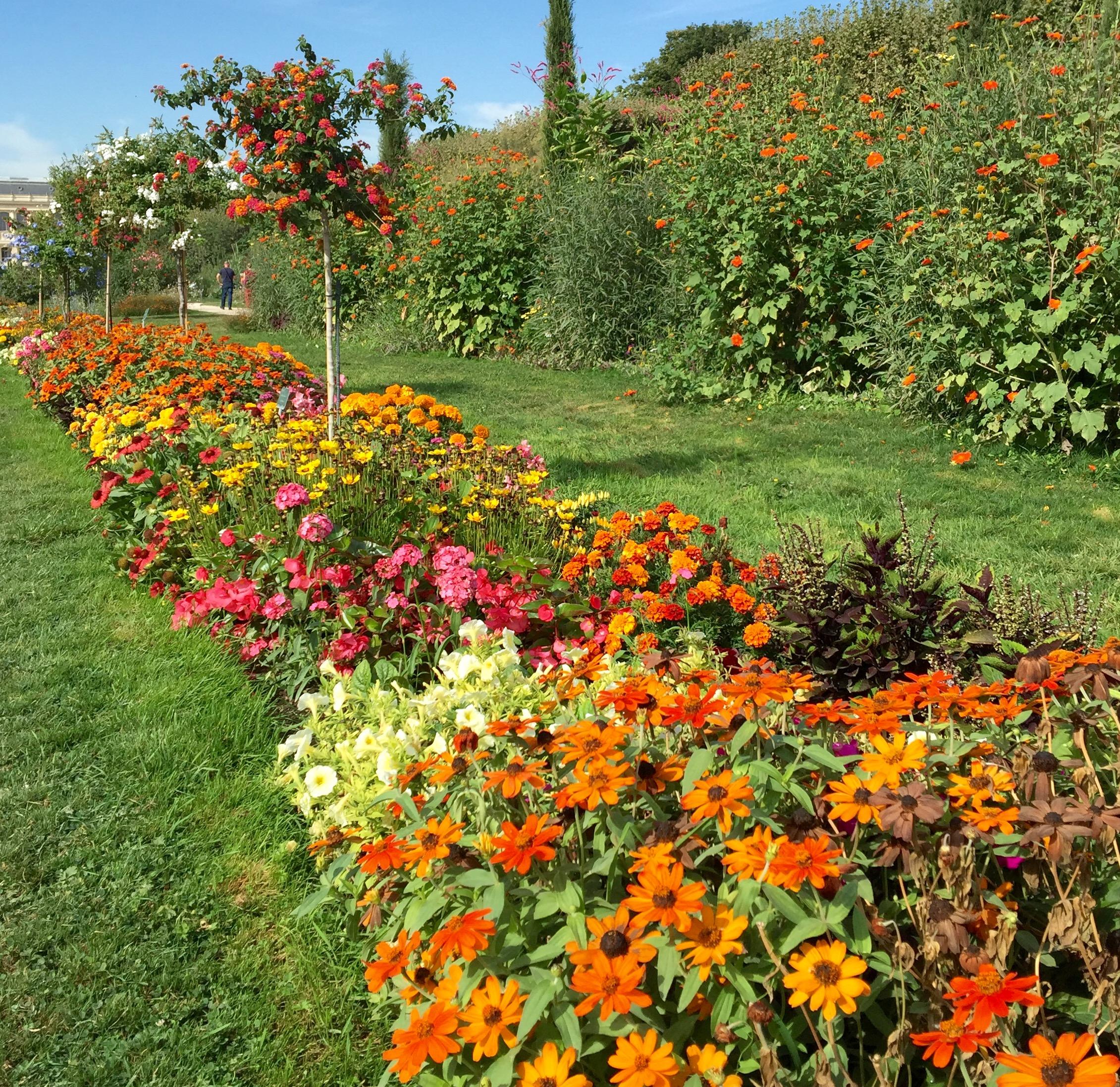 JardinDesPlantes.jpg