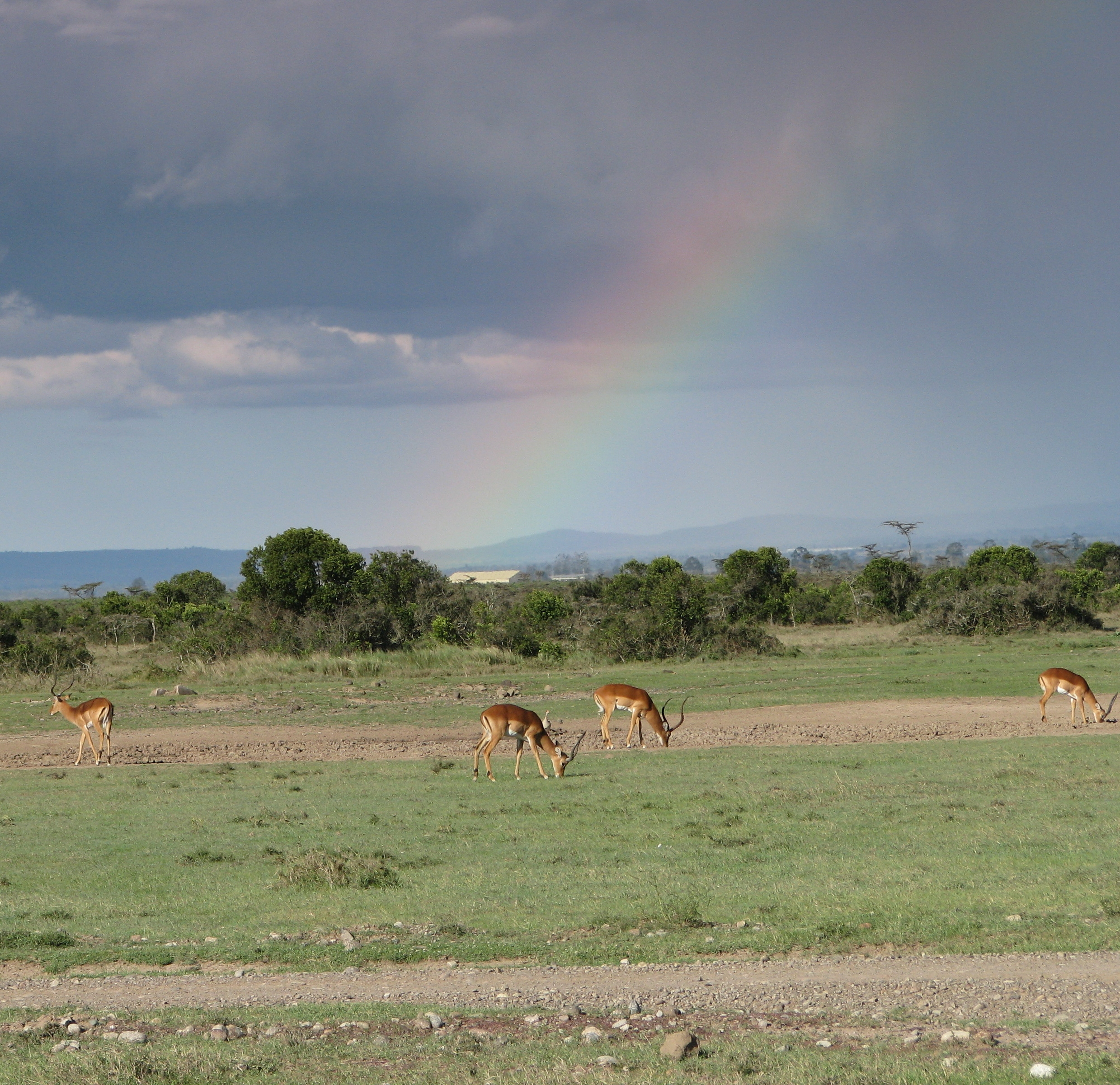 08-18-16 Rainbow.JPG