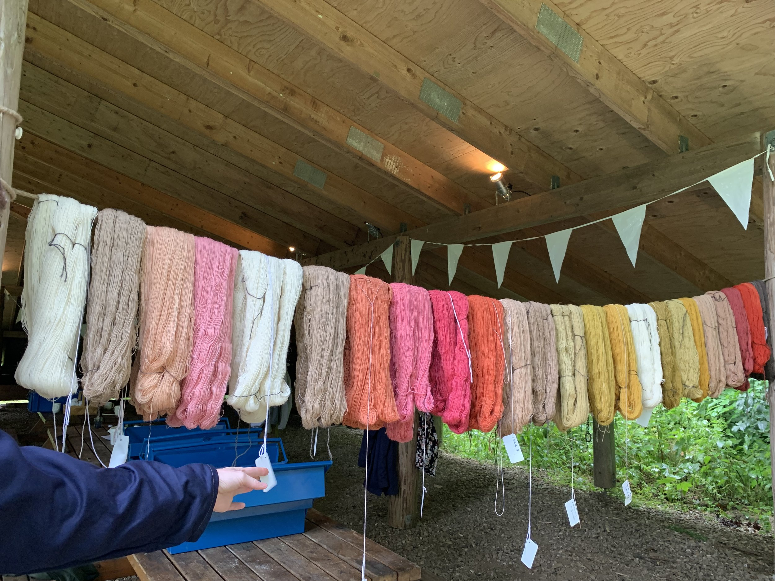 These skeins from previous dye baths and some undyed skeins will be over dyed with Indigo.