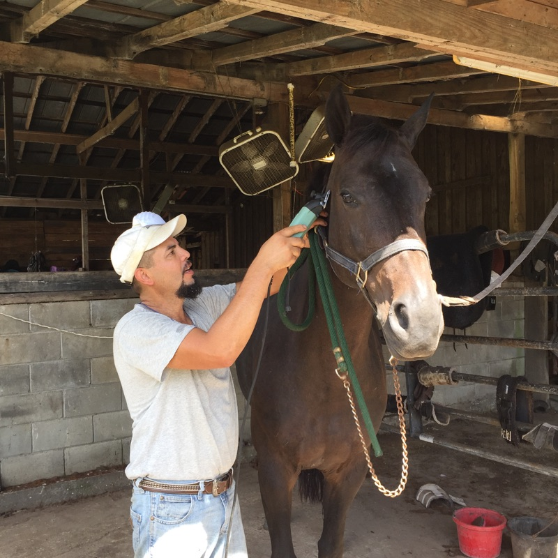 Biara getting body clipped by Joaquim Beltrane, so she'll look gorgeous for the trip to Texas!