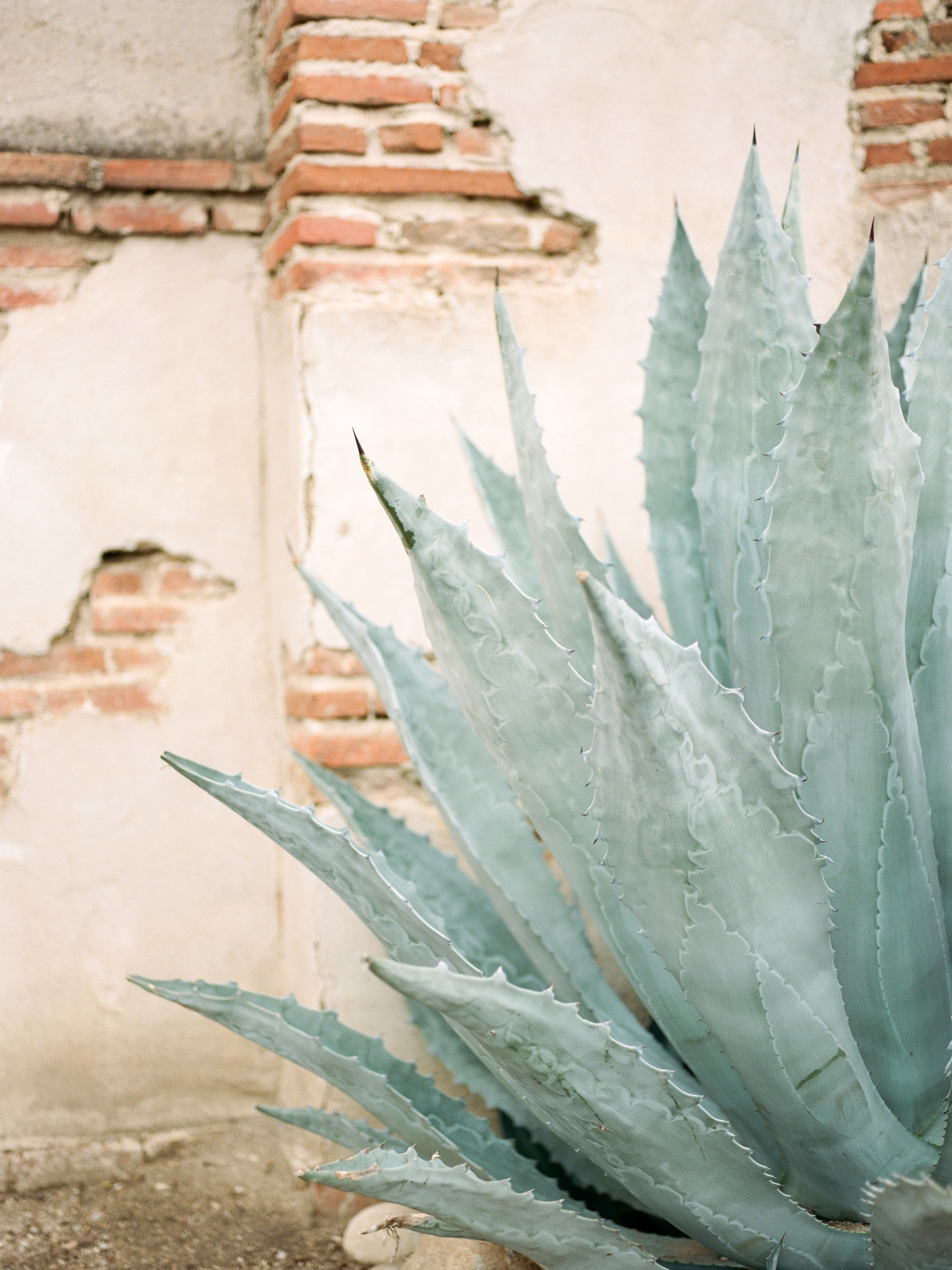 fine art    2016    agave on film    pentax 645