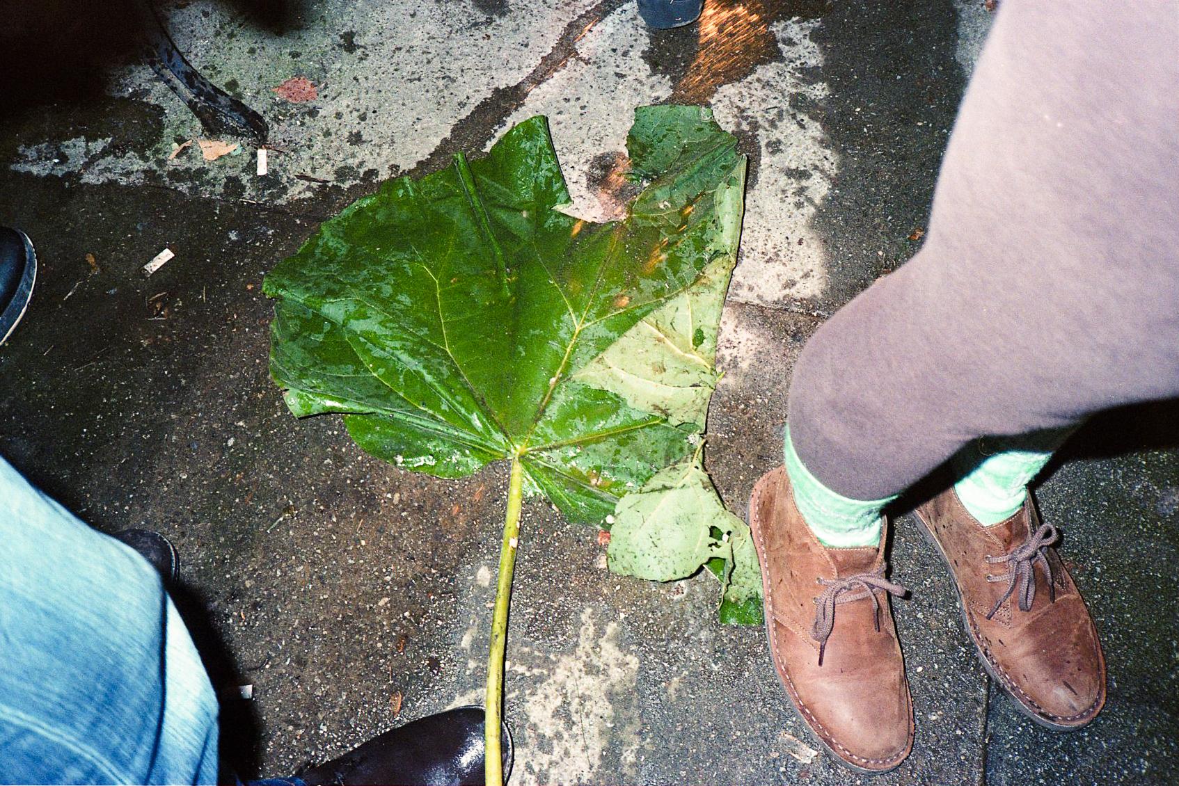 Grounded leaf