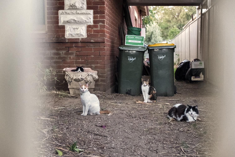 bonnie-saporetti_four-cats.jpg