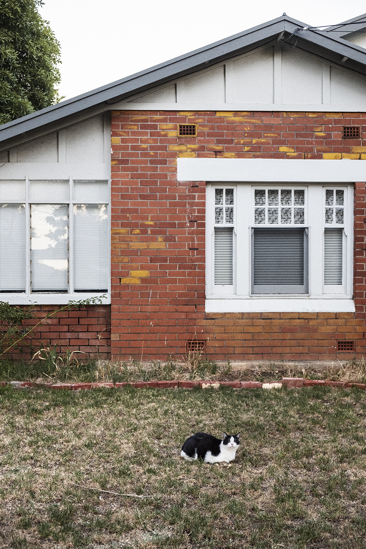 bonnie-saporetti_yard-cat.jpg