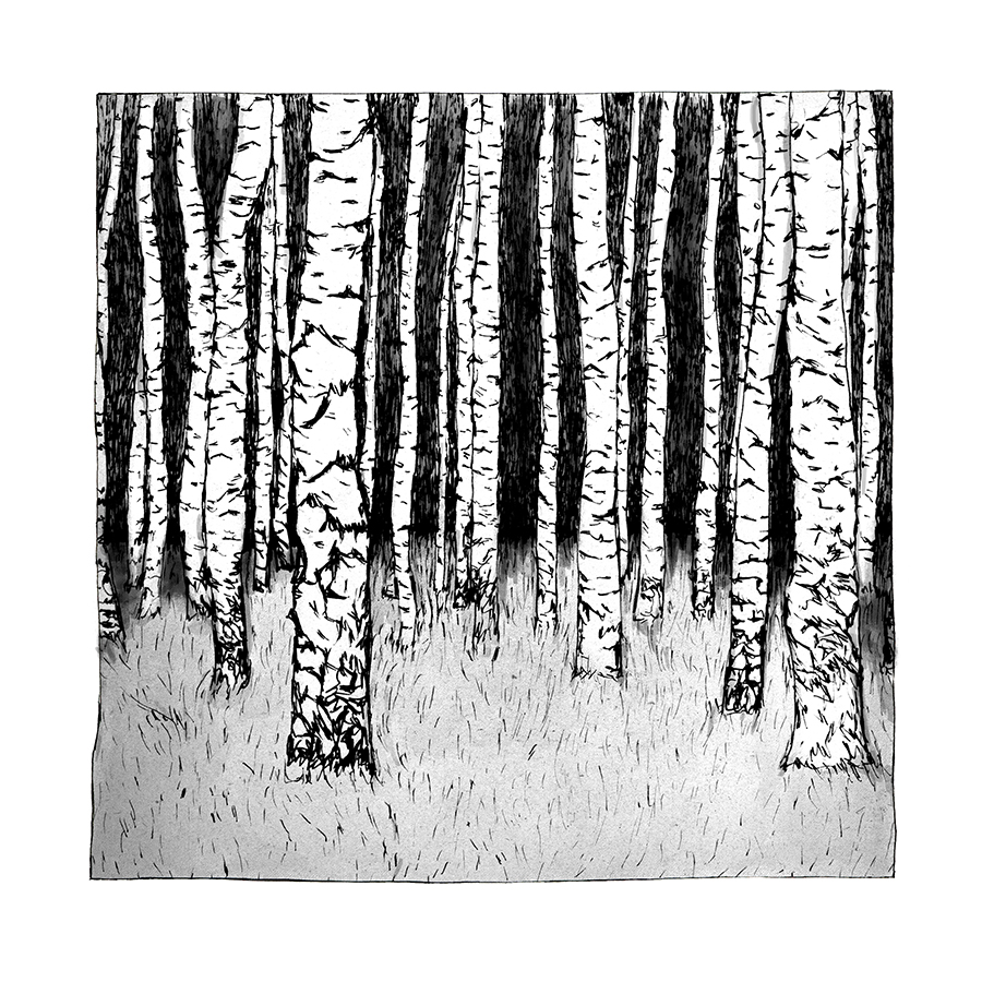 Birch Trees by Maria Nilsson