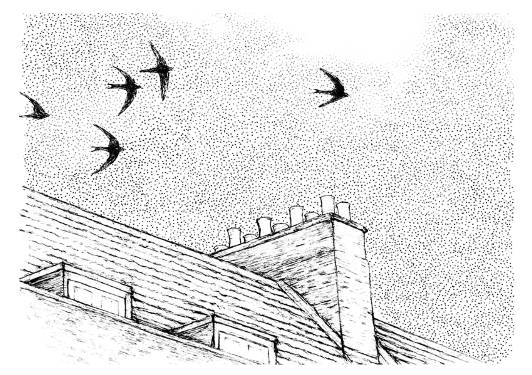 Swifts Illustration Maria Nilsson Toast Travels