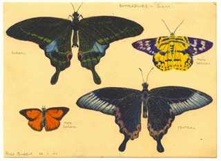 Ray Parkin painted the butterflies that flew around the Kwai Noi river and its valleys. In February 1943 he painted little else. He named them and dried others,  sticking them to the ceiling of his hut in the camp with slivers of bamboo.