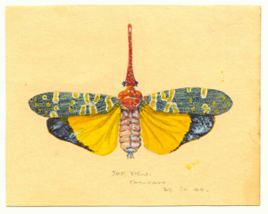 The Will-o-the-Wisp beetle given to Ray Parkin by Weary Dunlop while both were POWs in Konyu POW camp on the Thai Burma railway.