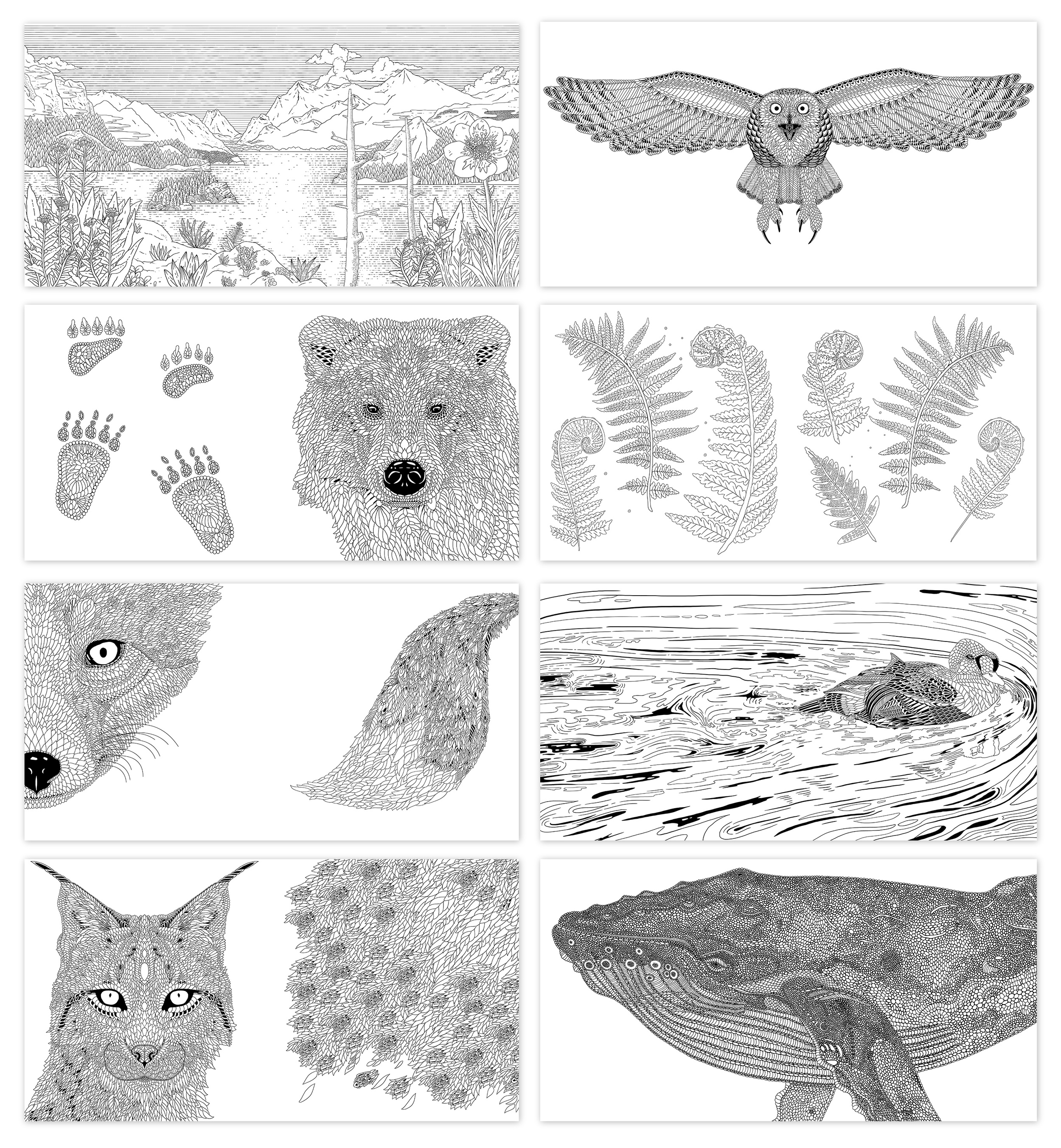 A selection of drawings from the book