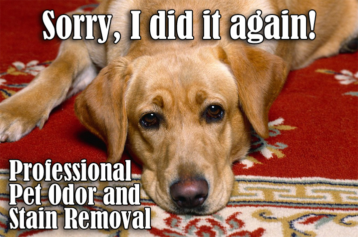 petstainremoval