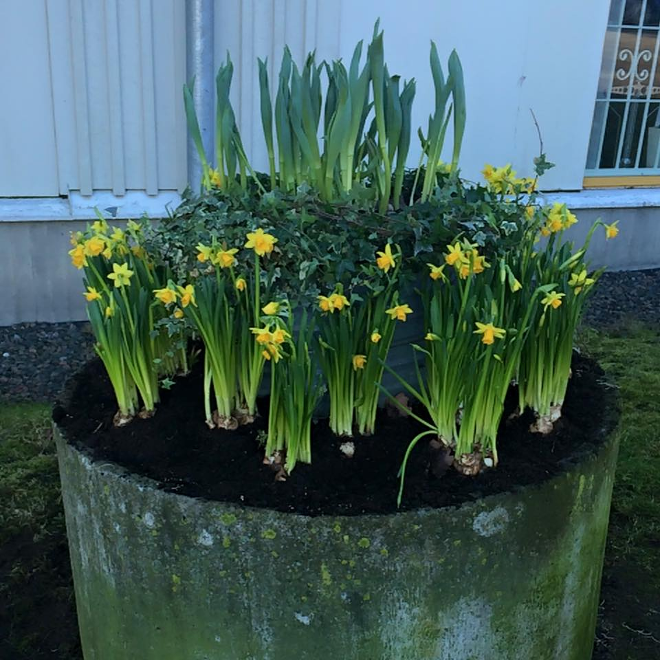 Planteringen utanför Apoteket & Systembolaget, Öckerö Centrum våren 2015