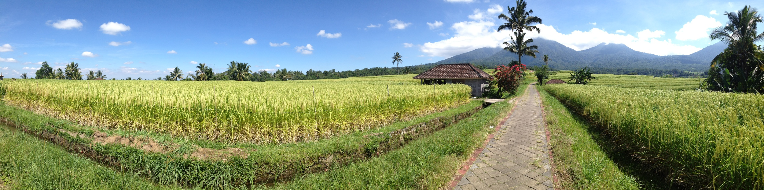 On one of our two day-excursions, we visited Jatiluwih. UNESCO Protected Rice Fields that stretch into the distance.