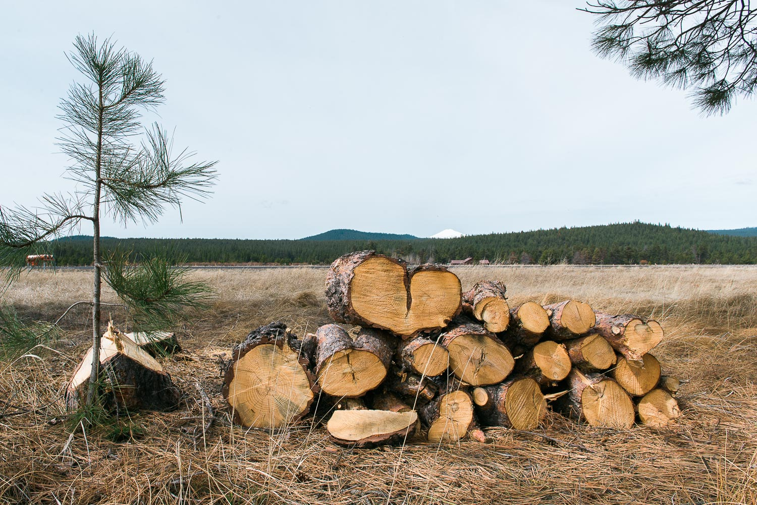 heart shaped logs and the smell of pine needles.jpg