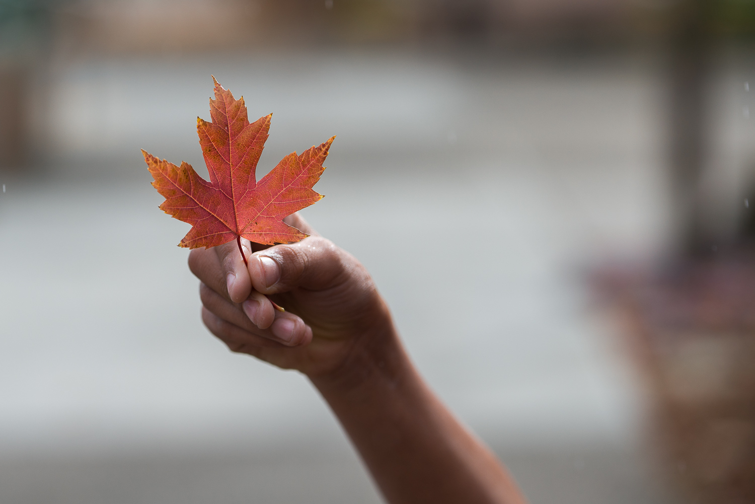 handheld red leaf.jpg