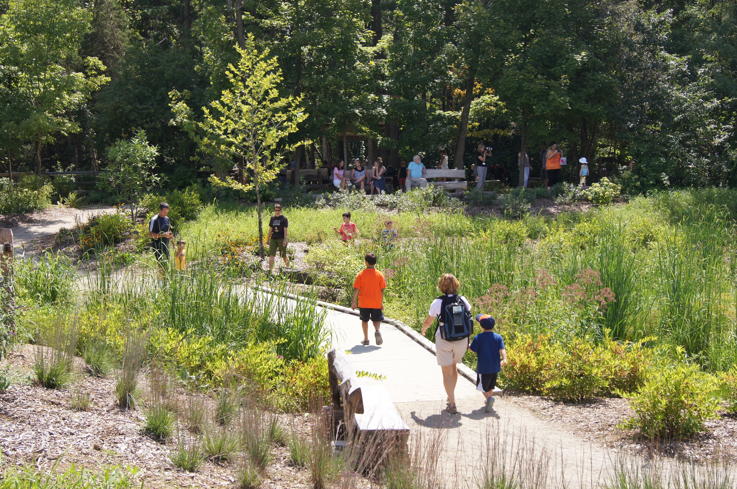 The accessible, recycled content boardwalk crosses through the wetland. Lateral stepping stones and logs lead children to more adventures and even closer contact with nature. The parent lookout terrace (in background) provides parents with great views of the entire site.