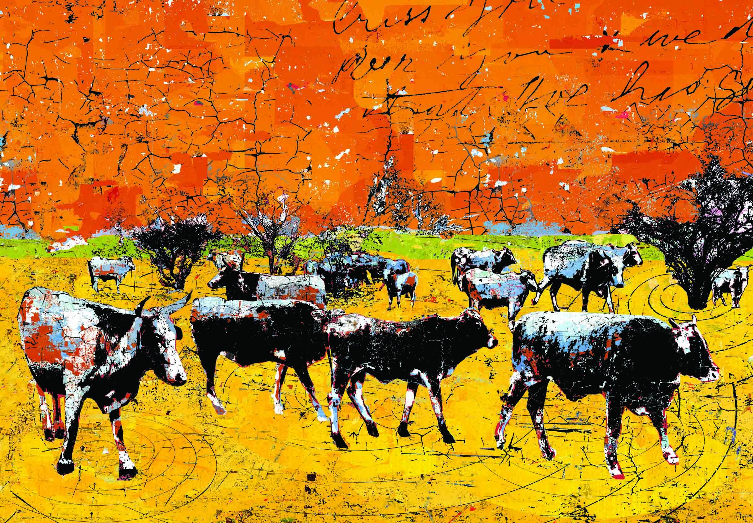Understanding Contemporary Cows