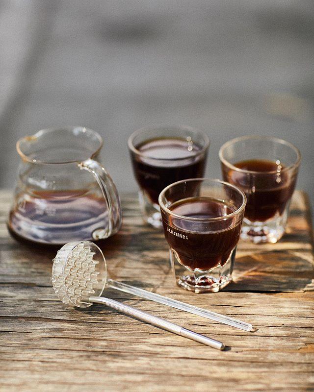 Vuelo Chelín ✨✨✨ . Degustación de 3 procesos distintos en los ya emblemáticos granos de Candelaria Loxicha, Oaxaca. @fincachelin . -Purple Honey -Hidronatural natural -Natural . Extracciones con @melodripco para tener tazas limpias y con gran nitidez. #cultoalcafé . . #barista #baristadaily #baristalife #brewcoffee #cafeteria #caffeinated #coffeeaddict #coffeegeek #coffeeholic #coffeelover #coffeeporn #coffeeshots #coffeesnob #coffeetime #cultoalcafe #cultoalcafé #drinkgoodcoffee #instacoffee #manualbrewonly #ourbarista #peoplebrewcoffee #pourover #pourovercoffee #specialtycoffee #thirdwavecoffee
