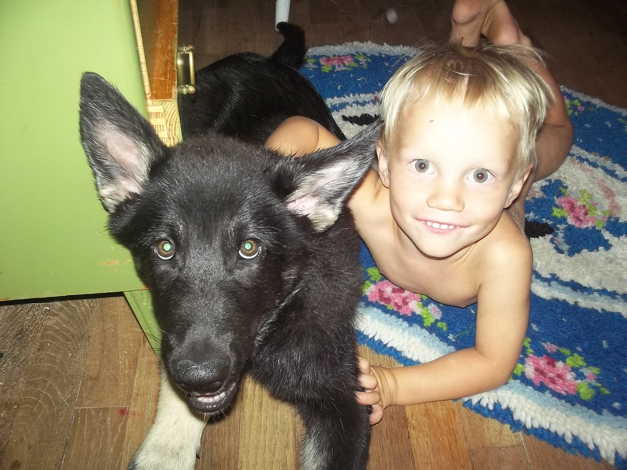 Zog - an extraordinary dog