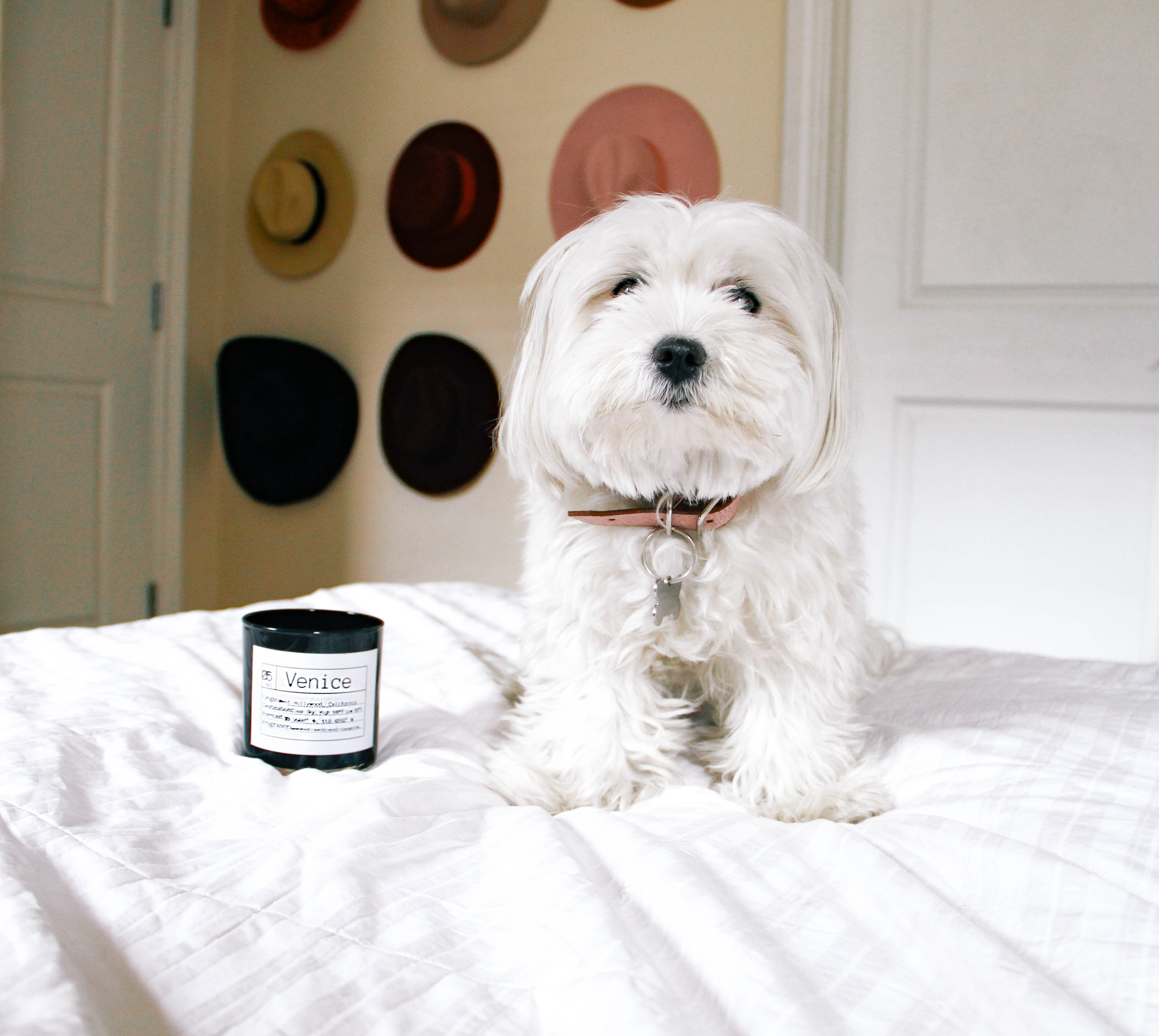 Flores Lane Candles via The Style Sauce Blog with Coton De Tulear