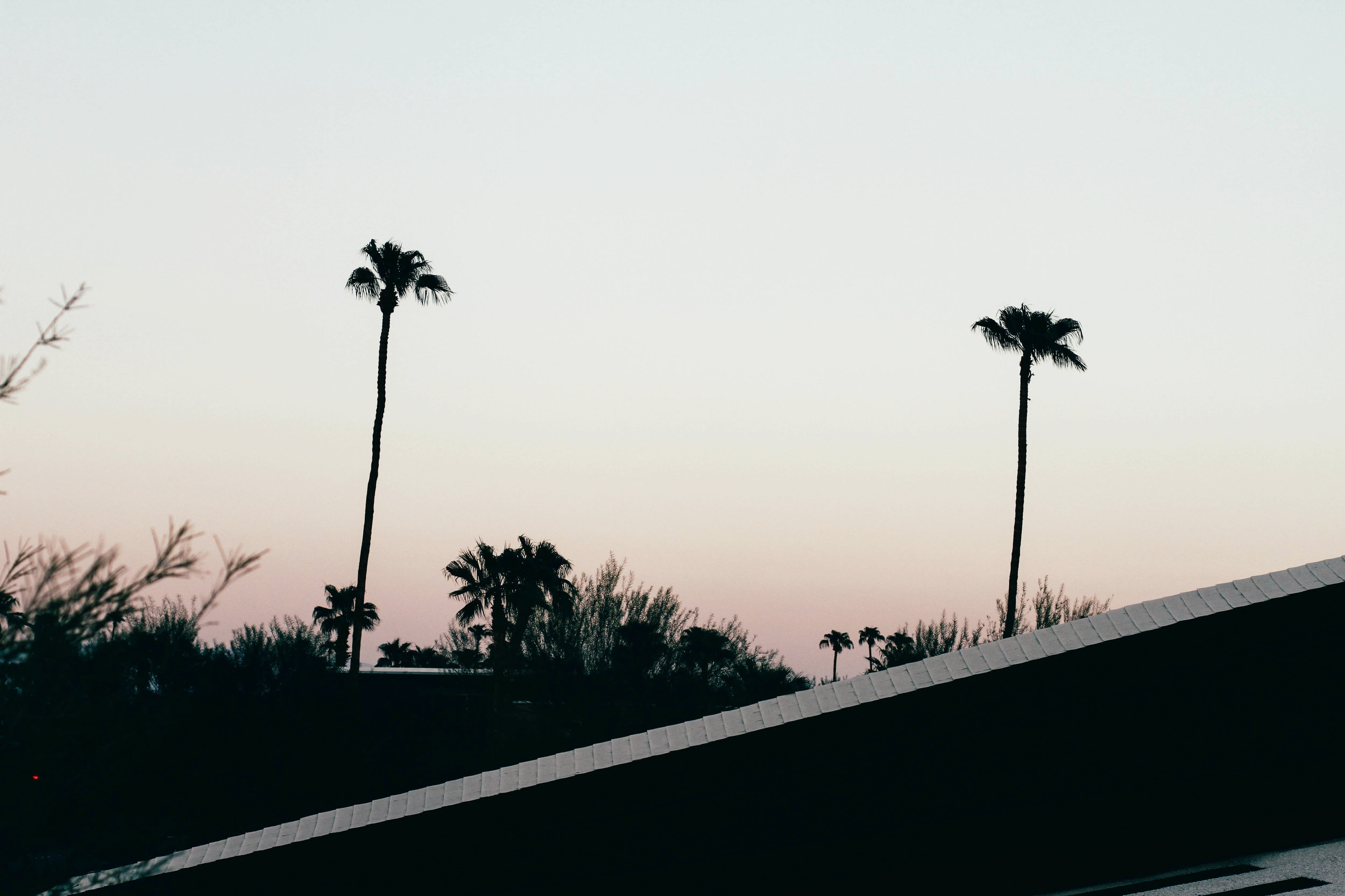 ace hotel palm springs palm trees sunset the style sauce travel blog