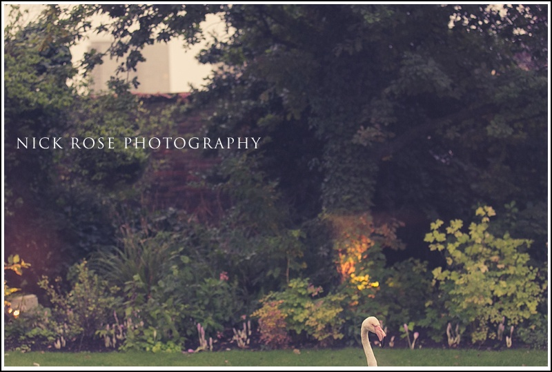 Kensington Roof Gardens wedding Flamingo's
