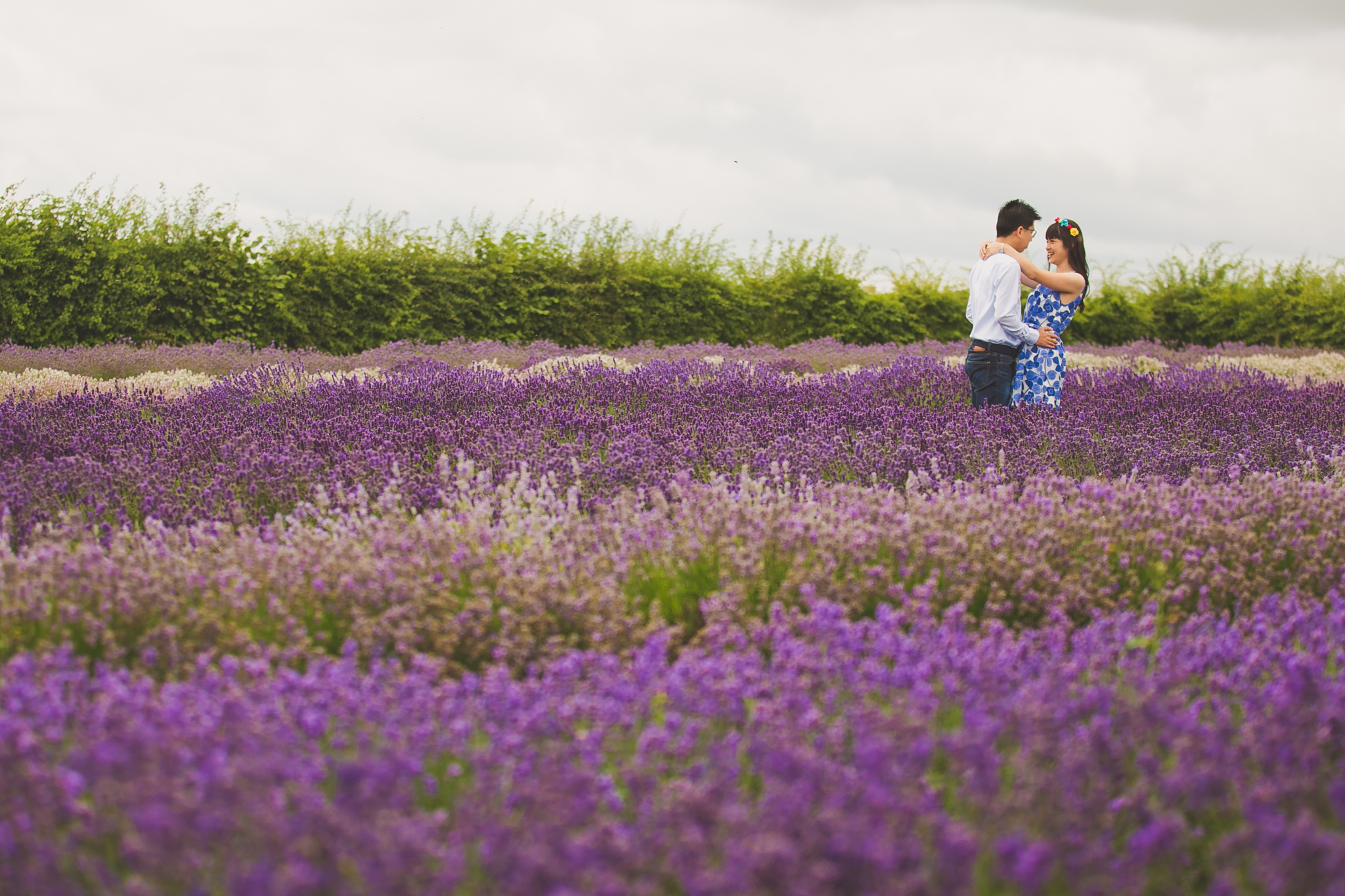 Lavender fields pre wedding photography in the Cotswolds UK countryside