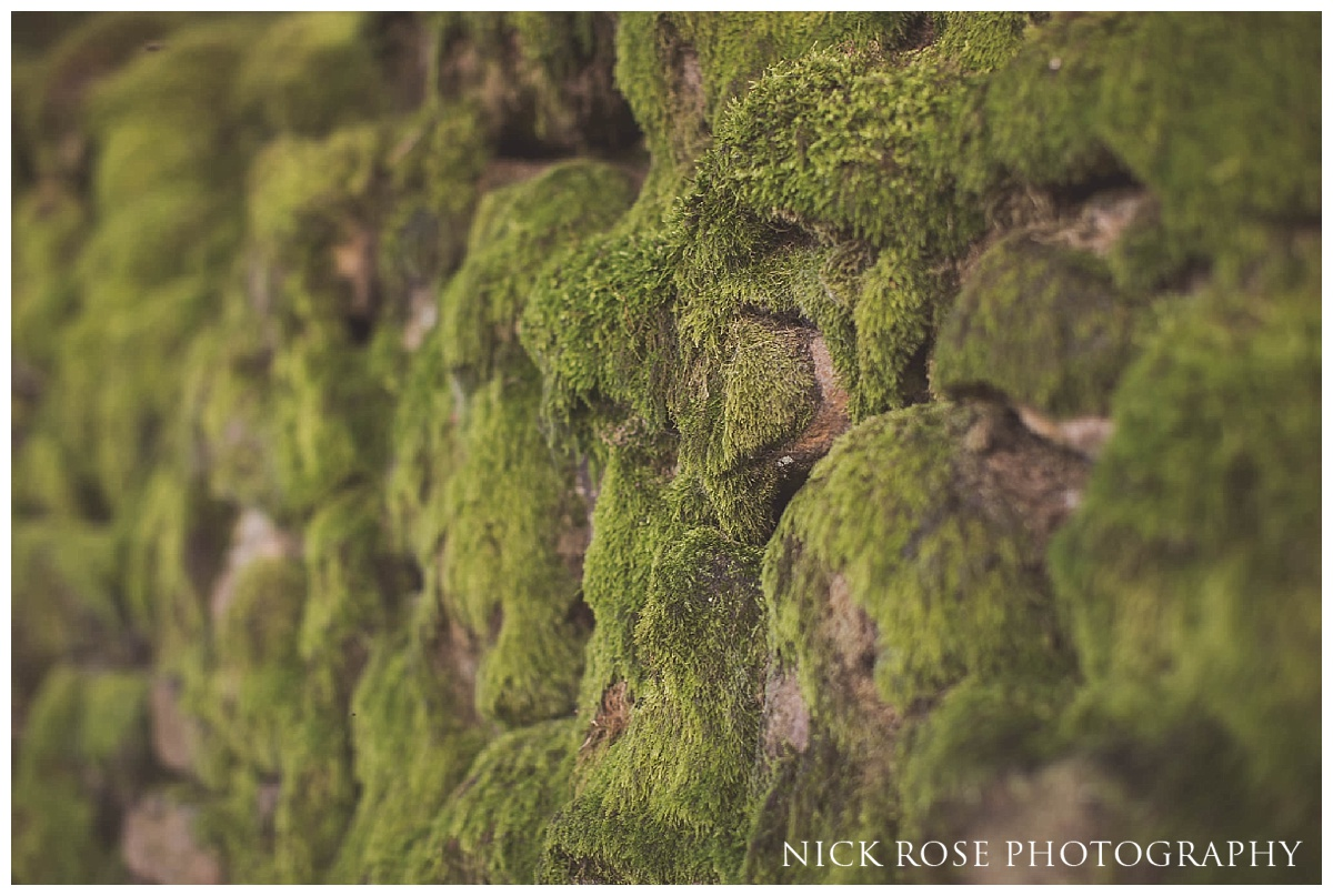 Green moss in the Peak District
