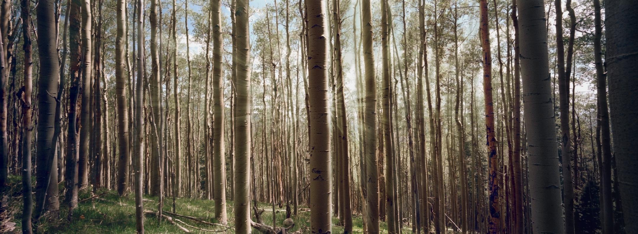Panoramic Bk1_6.jpg