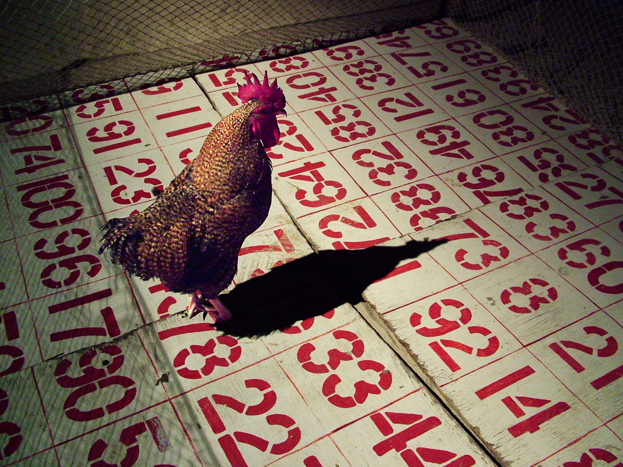 ChickenDrop1124Final.jpg