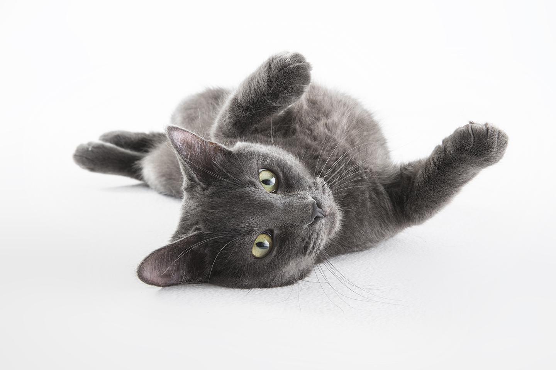 graycat_J0I7960.jpg