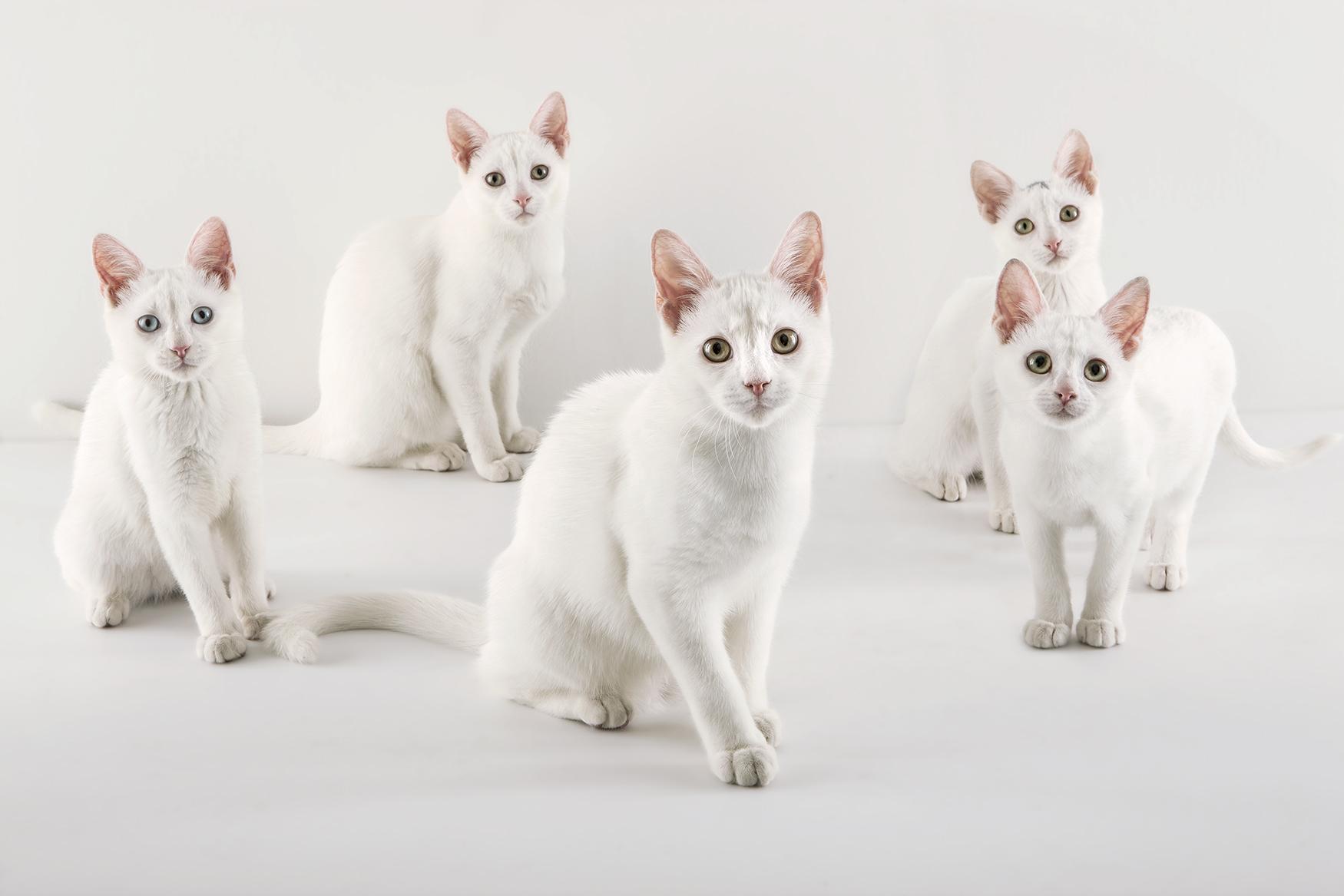 Morgan_whitecats7078_small.jpg