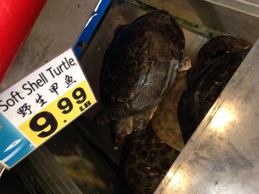 Turtle soup?