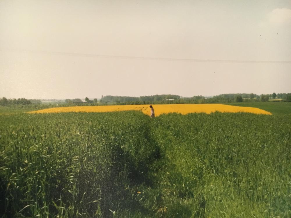 Roaming the fields again