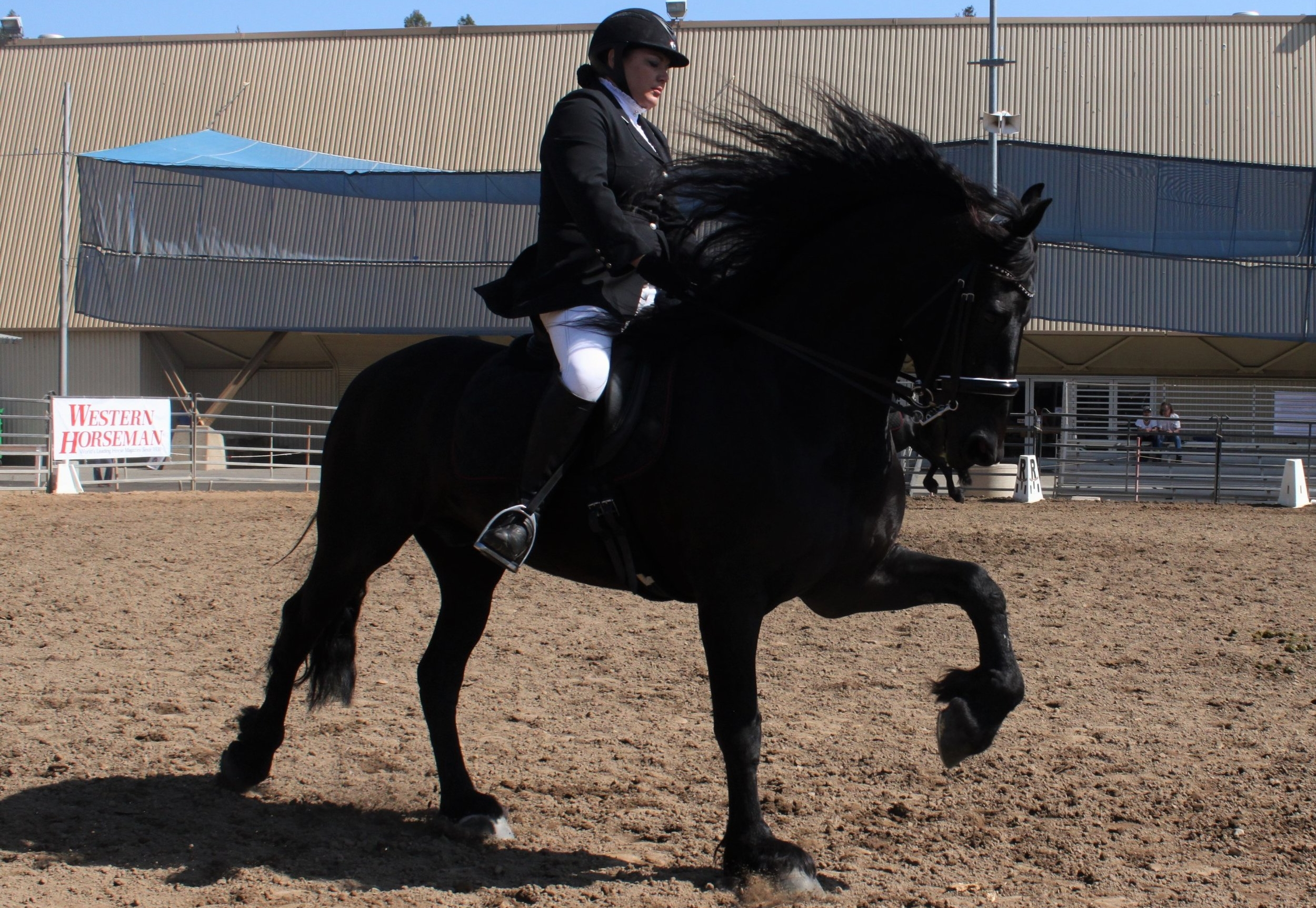 Horse Expo 2016 (104).JPG