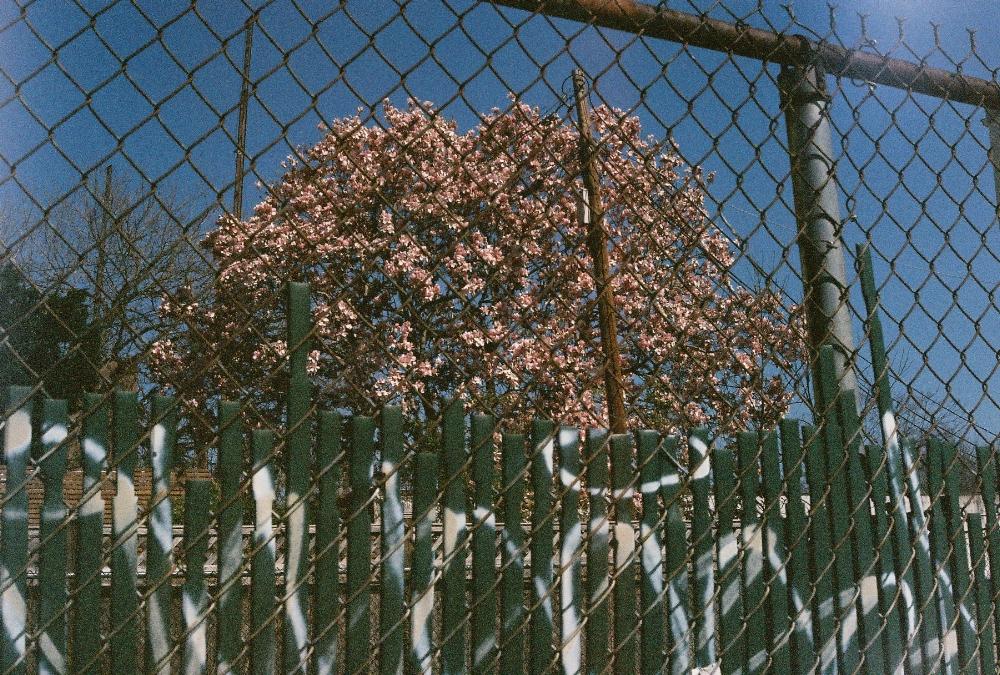City_Blossom.jpg