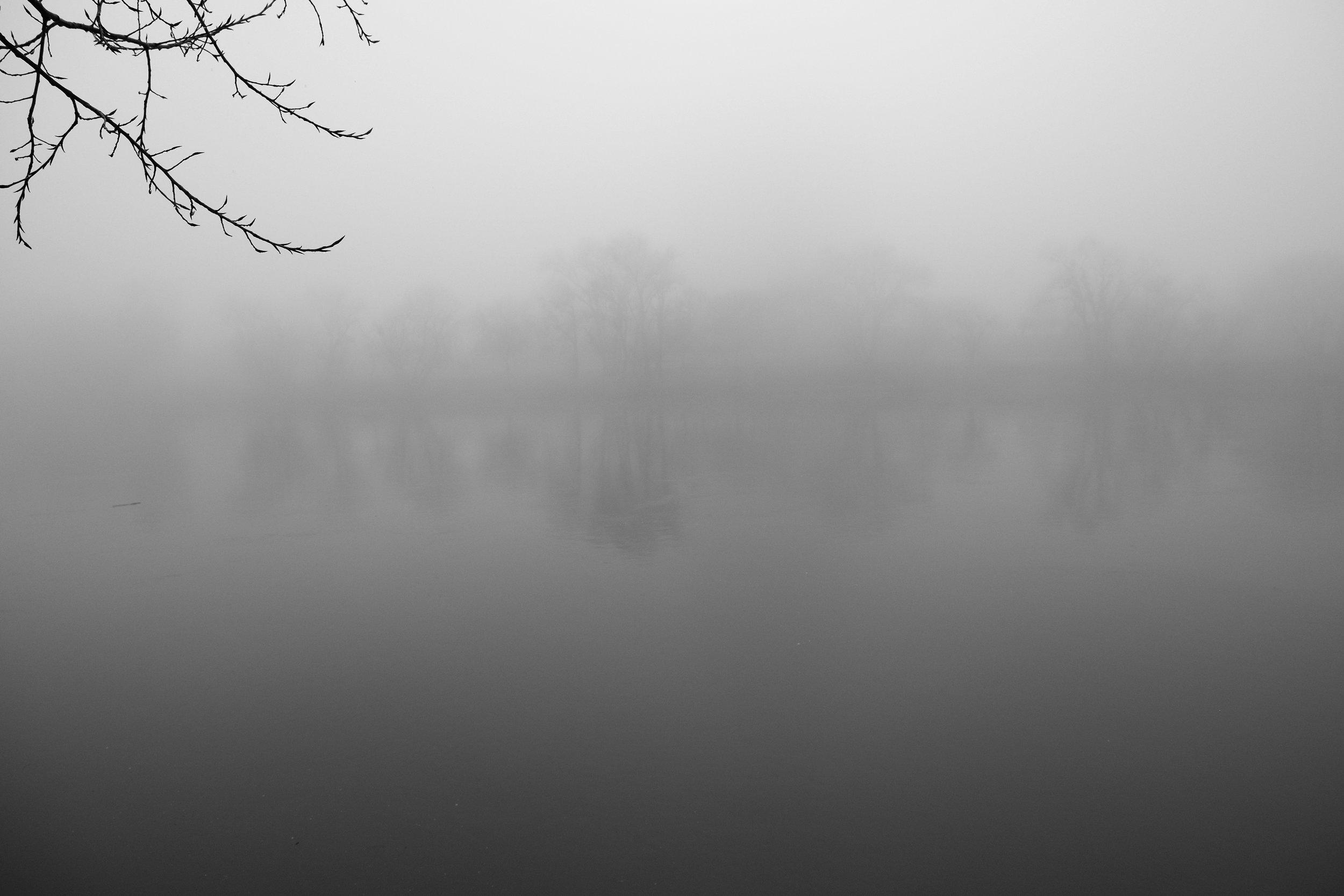 Fog Sac 2019 (22).JPG