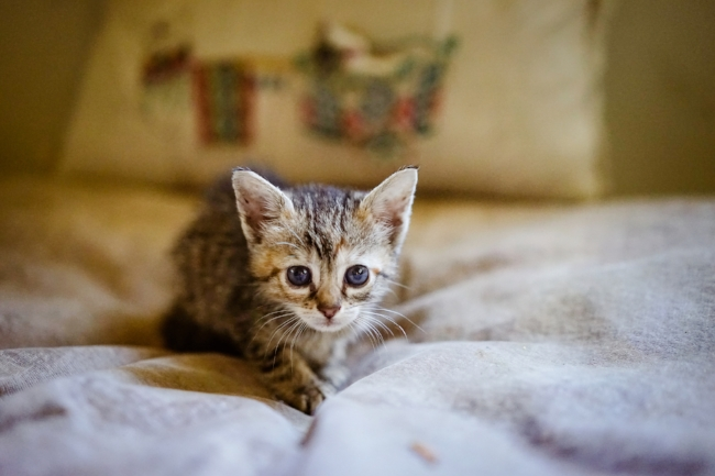 Cute Kitten Photos & New Swear Words