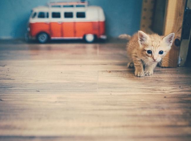 Damnation pussy kittens {Kitten VW Bus}