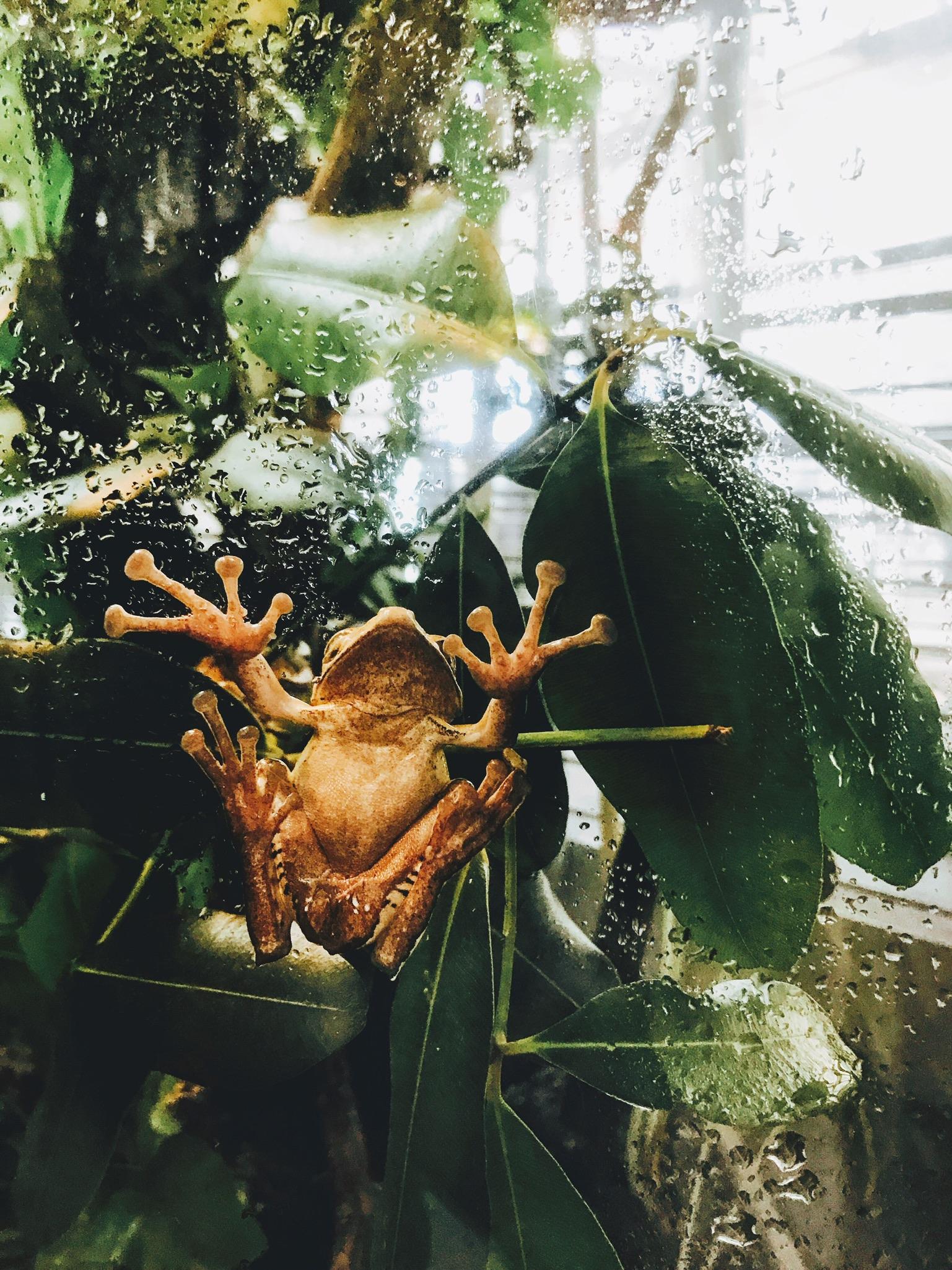 frog-photo-beneath.JPG