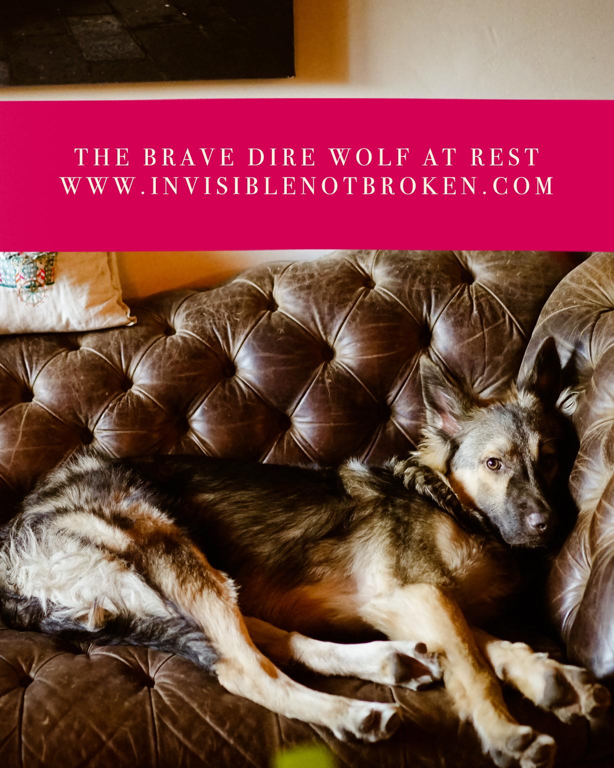 cute-shepherd-puppy-resting-on-couch-chronic-illness-blog-service-dog-fail.jpg