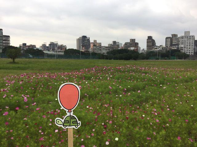 is this still taipei city? #oaklets #littleoakletstraveltheworld