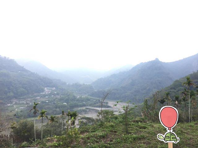 one of many #oaklets #littleoakletstraveltheworld #阿里山
