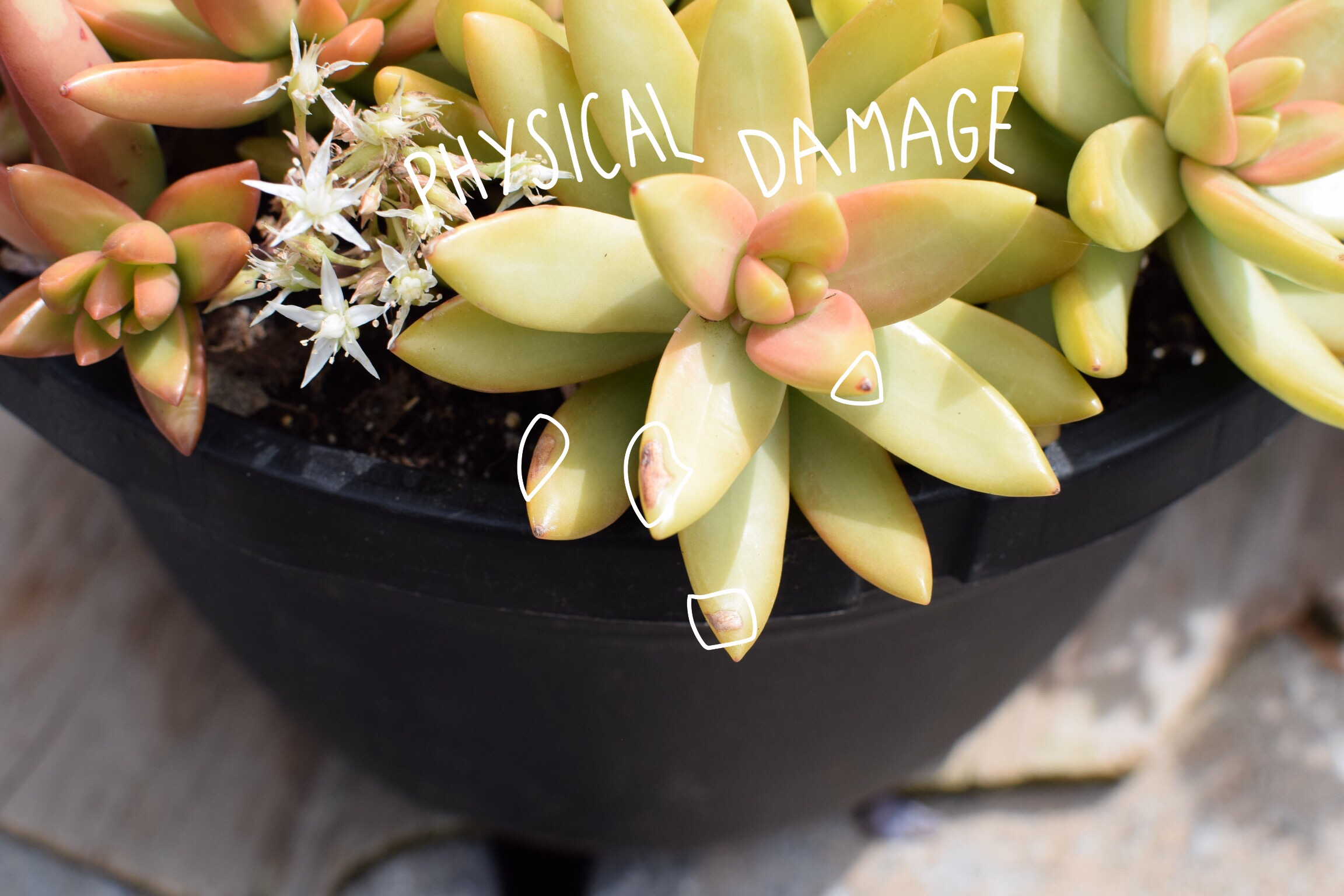 Signs Your Succulents Needs Extra Care and Love — Wearable