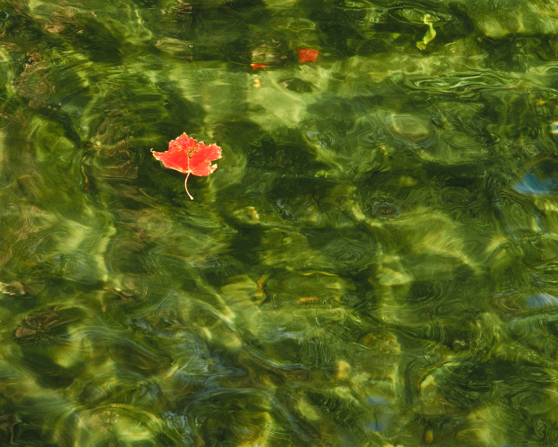 WaterLeaf1.jpg
