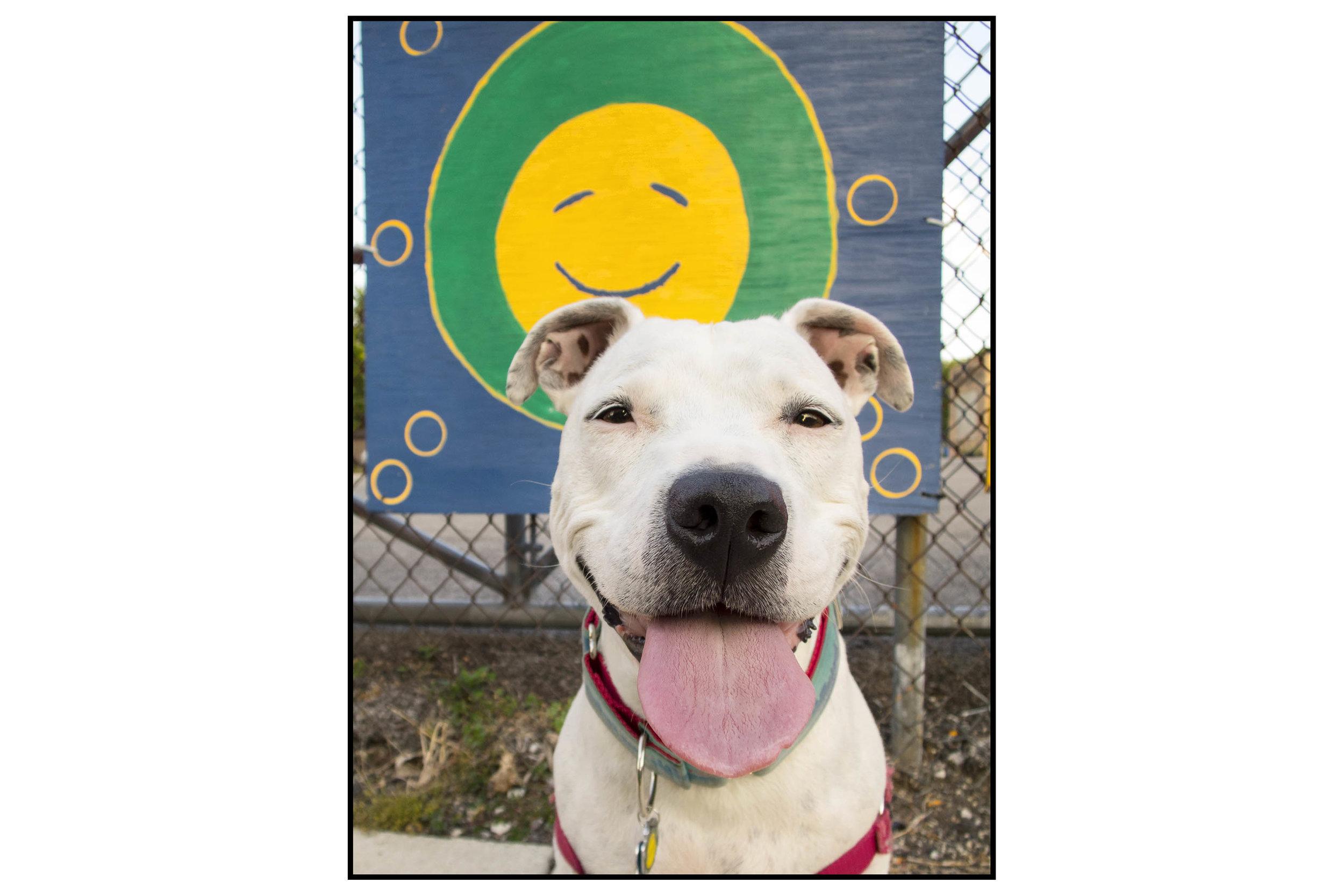 Mila smile board IMG_3443 ss.jpg