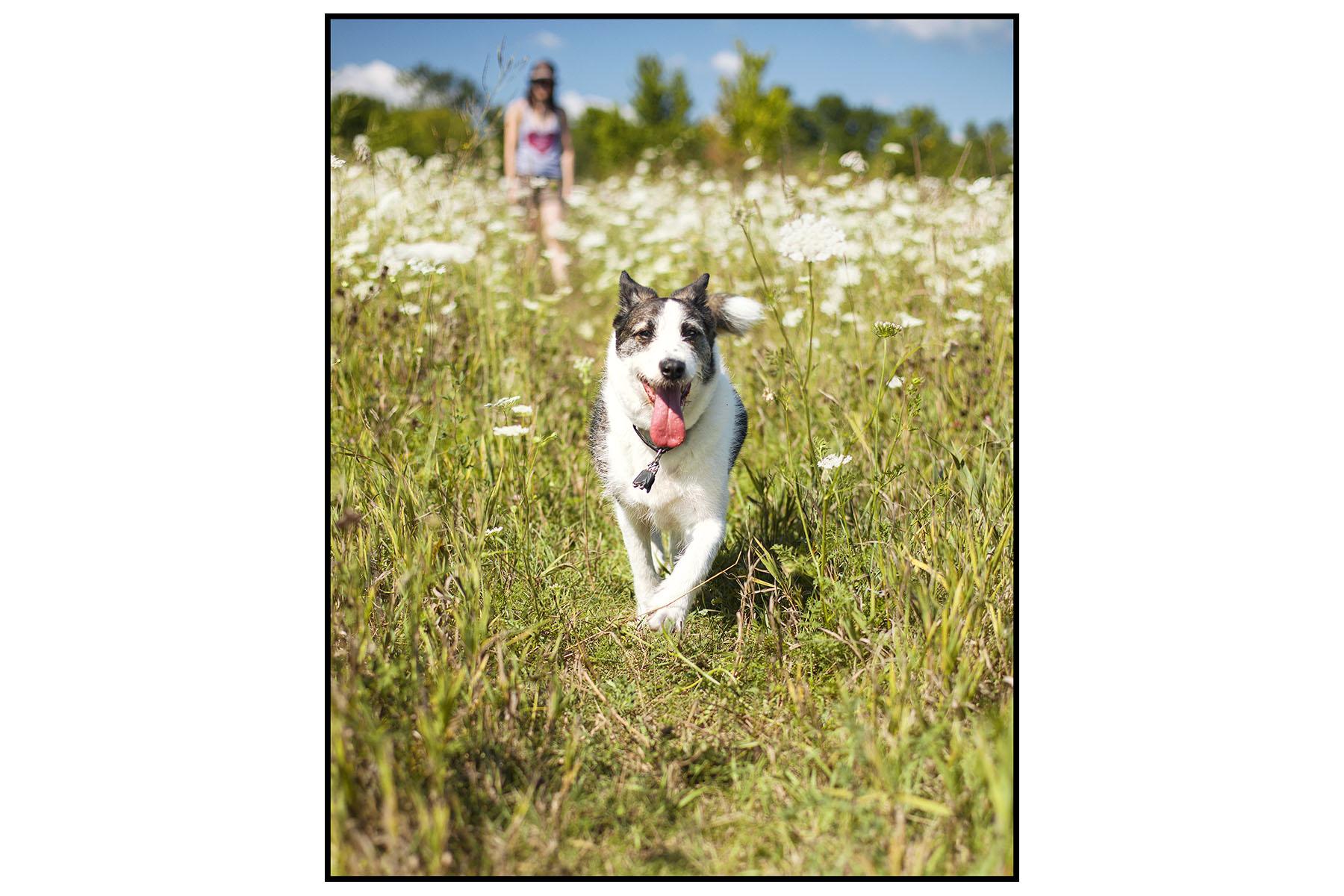 Sparky Mo Prairie Wolf Dog Park _MG_4537.jpg